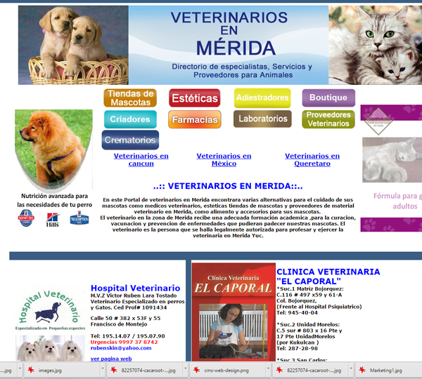 veterinarios-en-merida